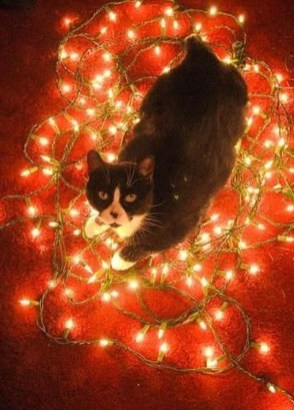Casual Winter Decorating Ideas For Pet Lovers To Try Right Now 18