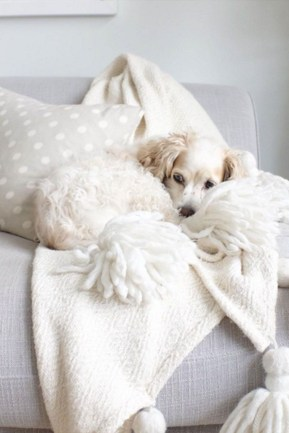Casual Winter Decorating Ideas For Pet Lovers To Try Right Now 25