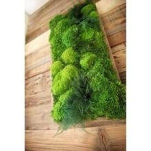 Delicate Natural Moss Wall Art Decorations Ideas To Try Right Now 13