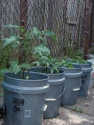 Luxury Container Garden Design Ideas For Your Landscaping Design 08