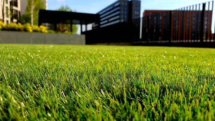 Lawn closeup with a house blurred in a background