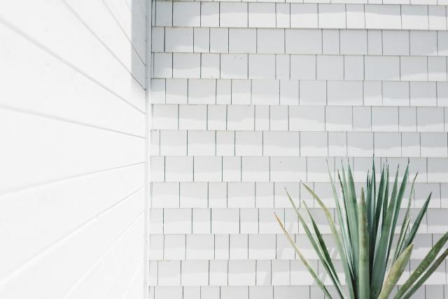 Tile wall with plant