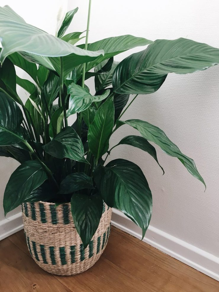 Kurve i indretningen med planter