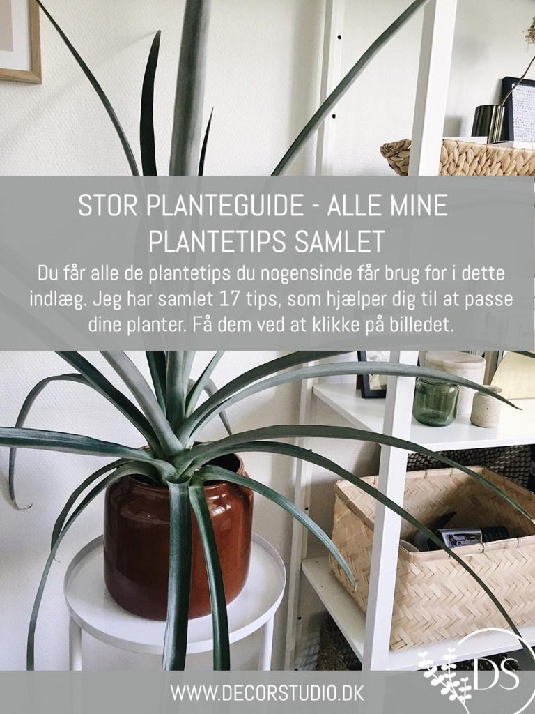 17 plantetips