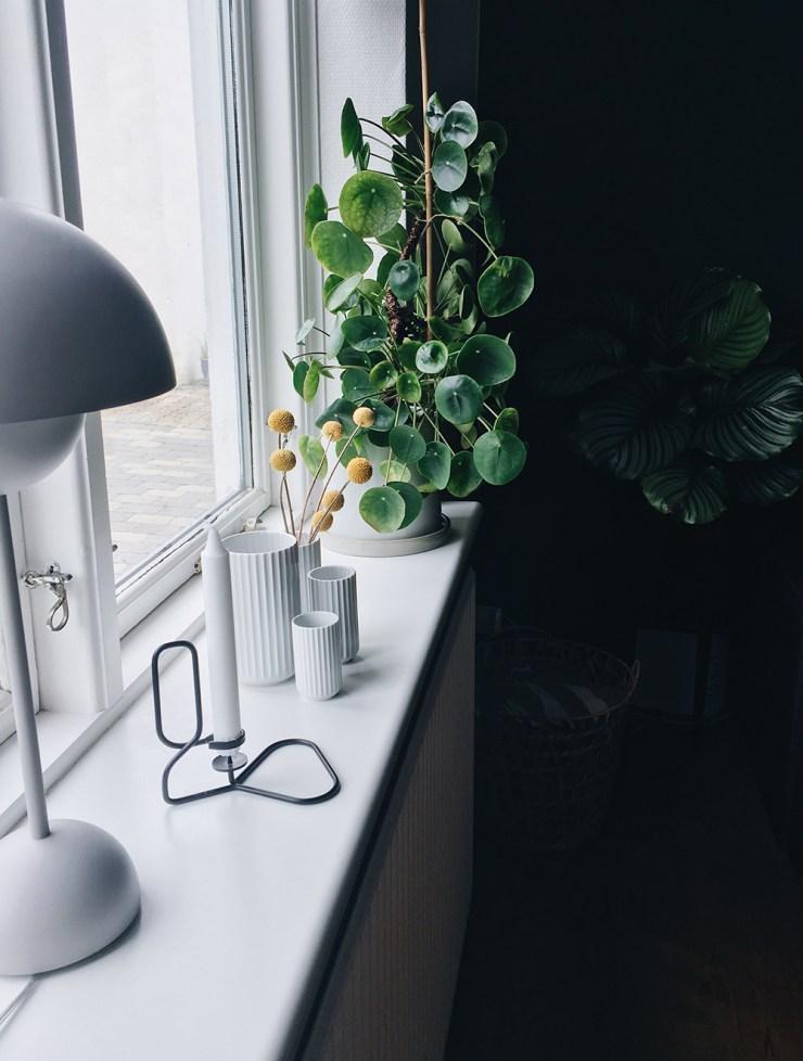 Stor planteguide alle mine plantetips samlet