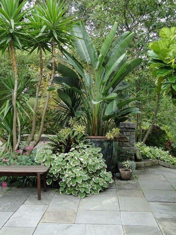 Mesmerizing Tropical Backyard Ideas to Freshen Your ... on Tropical Backyards  id=62034