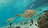 tahiti-marine-environment