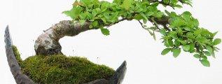 cursos gratis de bonsais