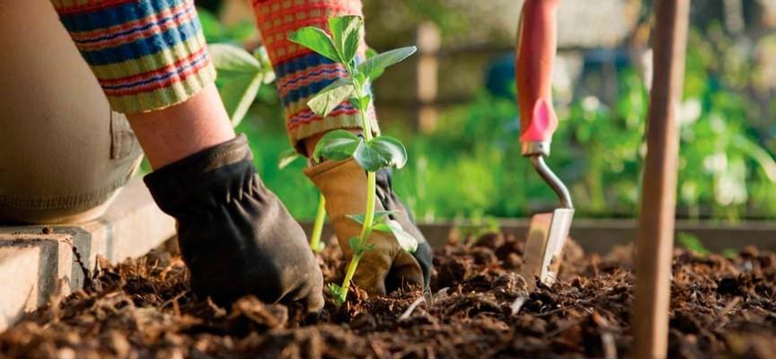 cursos gratis de jardineria