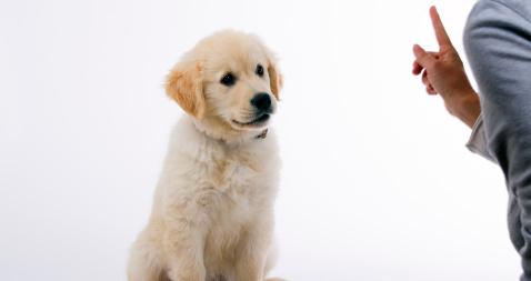 cursos de adiestramiento canino gratis