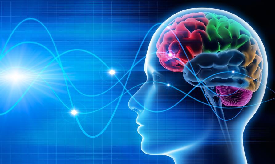 Cursos de neurociencias gratis
