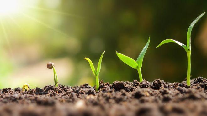 Curso de plantas gratis