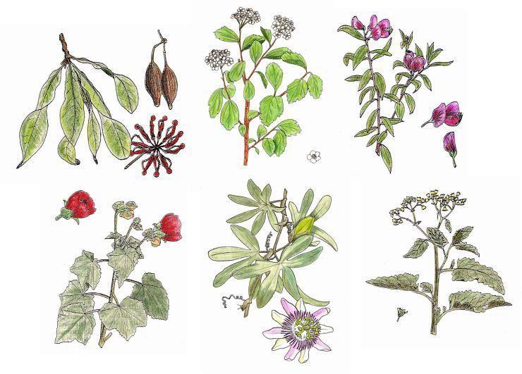 Curso de plantas medicinales gratis