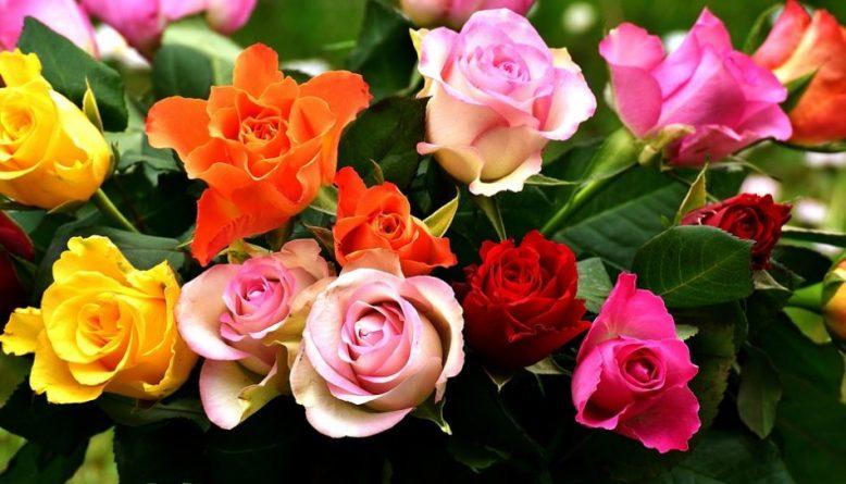 Unduh 910+ Gambar Aneka Jenis Bunga Mawar HD Gratid