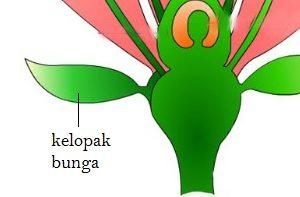 kelopak bunga