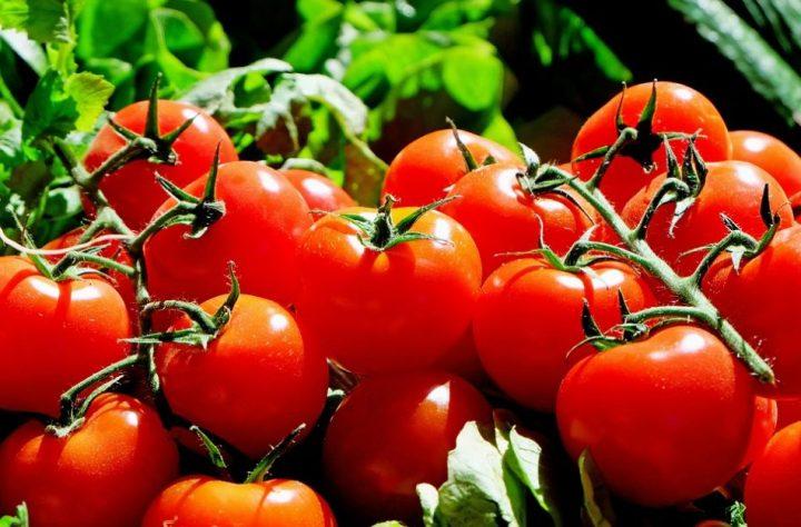 macam macam sayuran tomat