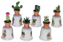 X668_macetas_cactus