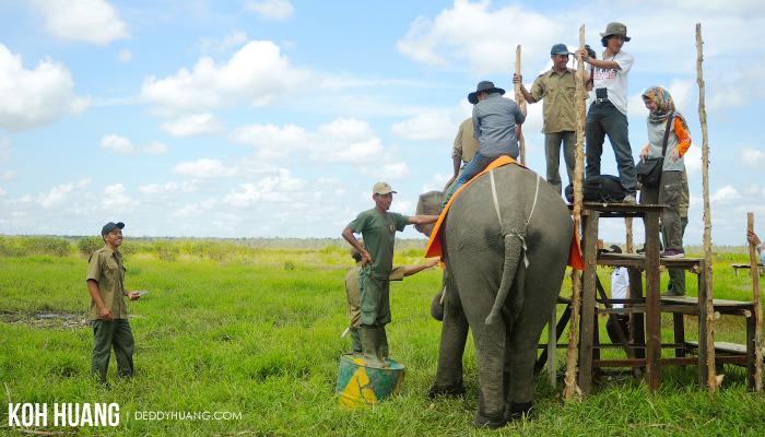 antrian naik gajah - Suaka Margasatwa Padang Sugihan, Potret Eksistensi Gajah Sumatera