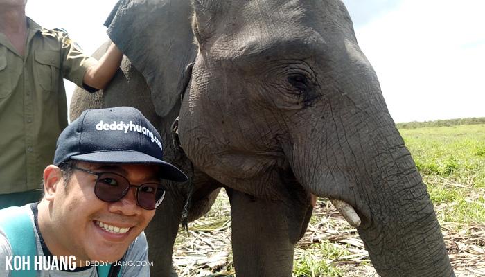 selfie gajah - Suaka Margasatwa Padang Sugihan, Potret Eksistensi Gajah Sumatera