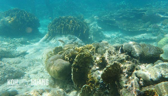 karang di failonga - Failonga, Unspoken Beauty of Tidore