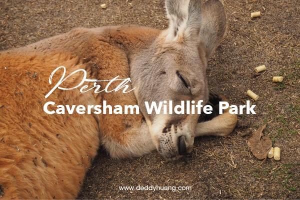 Selfie Bareng Kanguru di Caversham Wildlife Park, Perth