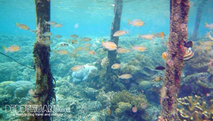 raja ampat 02 - Wonderful Indonesia, Tanah Air Beta!