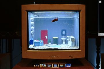 akuarium ikan cupang hias
