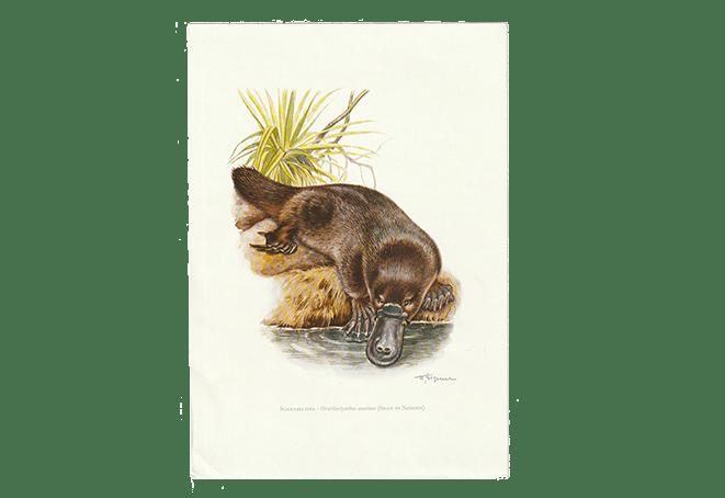 Vintage dierenprint vogelbekdier
