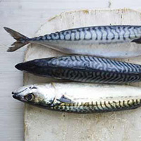 Oily Fish - Stock Photo