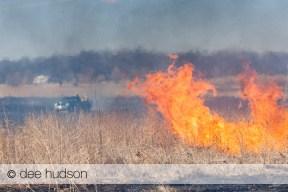 The head fire speeds across the prairie.