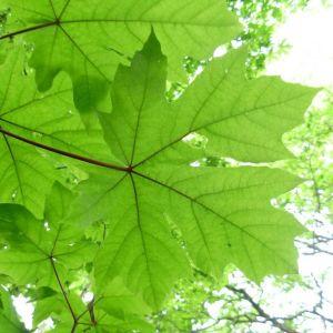 Bareroot Trees & Hedging 2018-19