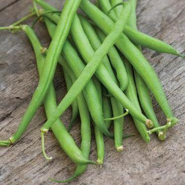 Beans - Dwarf French 'Speedy'