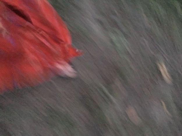 reddressblur_deemallon - Copy