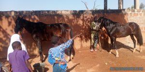 Gaani 2020: Les cavaliers se préparent petitement