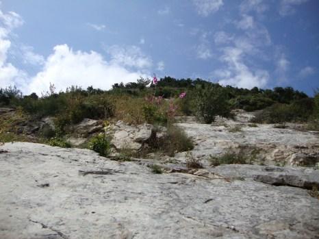 Looking up next to Elijah's Cave