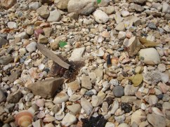 Polution on Haifa's beaches