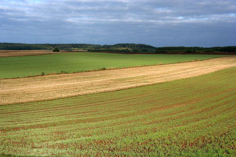 800px-Landscape_Bohoniki_Podlasie_Poland.jpg