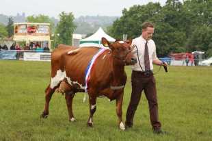 Surrey County Show 2014 - Alan Meeks (75)