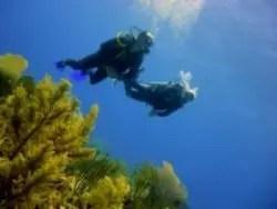 DSD descubre el buceo en el segundo arrecife más grande del mundo