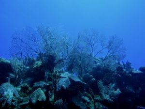Arrecife de coral en el mar Caribe - México