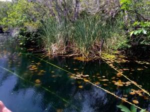Cenote Carwash (Aktun Ha), Tulum Mexico