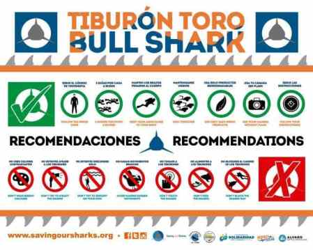 Dive recommendations when diving with the bull sharks