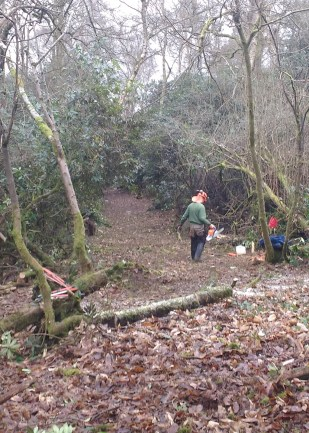 Friends of Deepdene cutting new paths on the Trail.