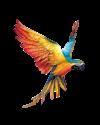 wp-content/uploads/2021/01/parrot.png