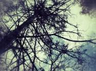 Cedar Neurons