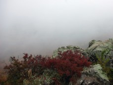 Petit Jean Mountain - Muted Sumac