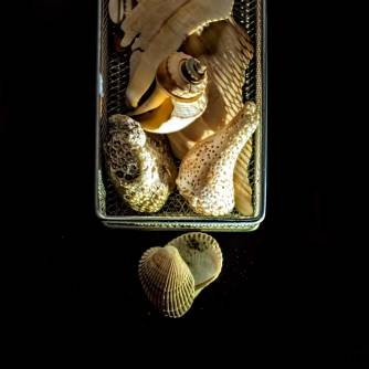 Still-life with seashells and light/shadow patterns.
