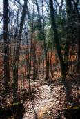 Leslie Coston Photography, Mt Sequoyah Woods, Arkansas, Hike