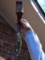 Bottle Tree 6