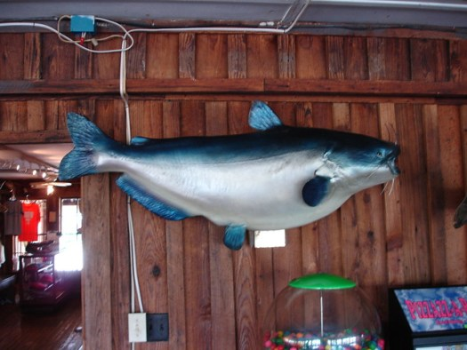 World Record Blue Catfish (mounting by Archie Phillips) at Ezell's Fish Camp, Lavaca AL